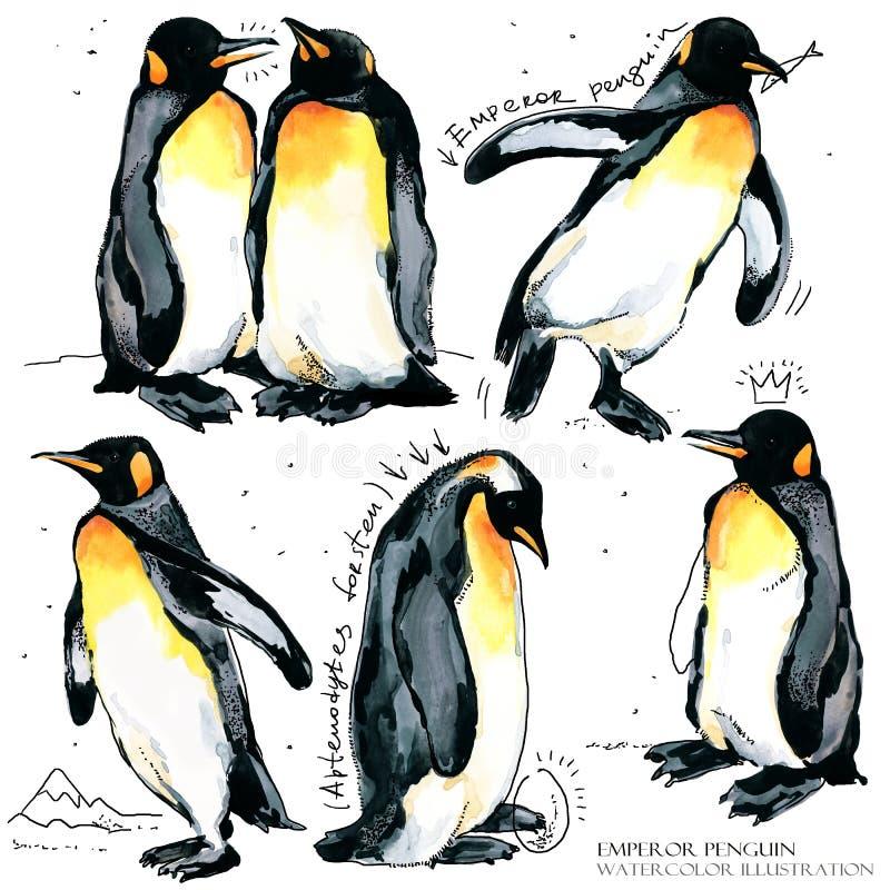 Illustrazione stabilita dell'acquerello del pinguino di imperatore illustrazione di stock