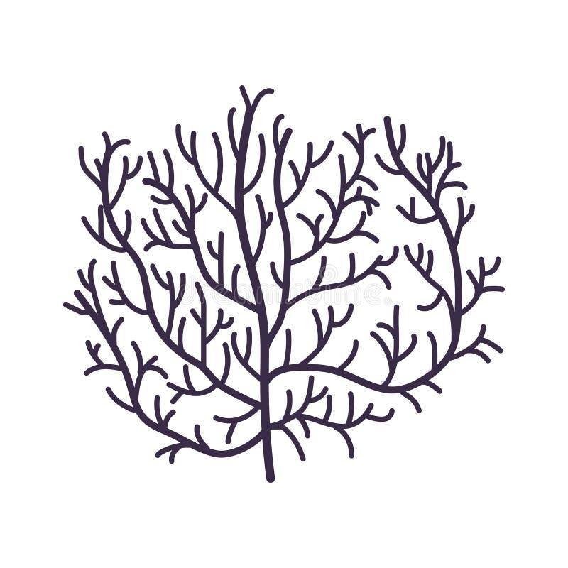 Illustrazione subacquea di vettore della pianta dell'alga, del corallo dell'oceano, del marinaio o dell'acquario illustrazione di stock