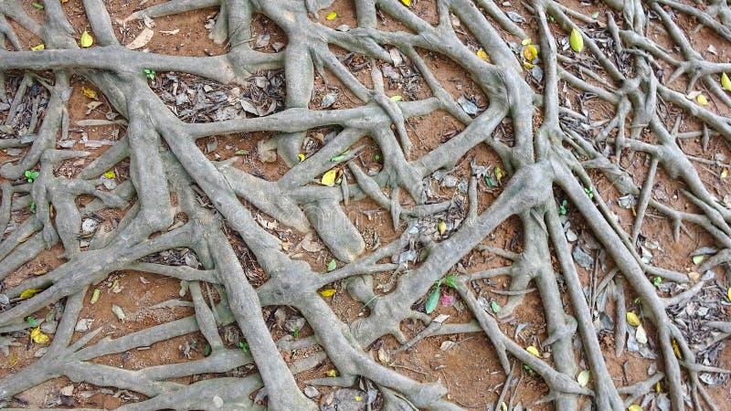 Illustrazione sudicia del fondo delle radici dell'albero fotografie stock libere da diritti