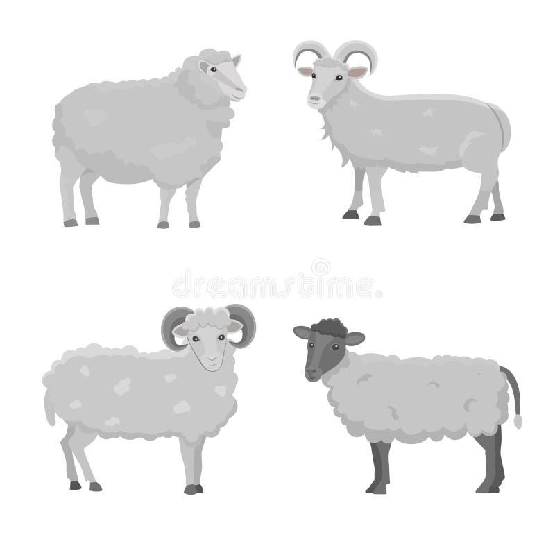Illustrazione sveglia stabilita delle pecore e del Ram di vettore retro Siluetta diritta delle pecore su bianco Giovani del latte royalty illustrazione gratis