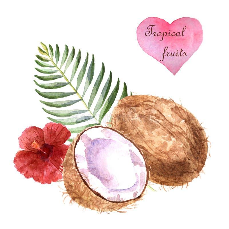 Illustrazione tropicale dell'acquerello con la noce di cocco e foglia di palma su fondo bianco illustrazione vettoriale
