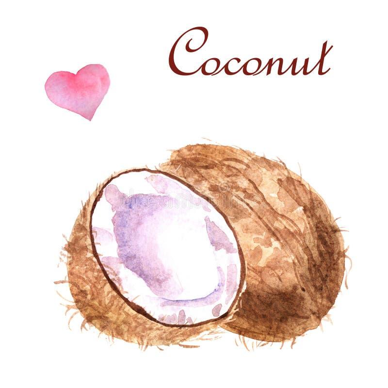 Illustrazione tropicale dell'acquerello con la noce di cocco su un fondo bianco illustrazione di stock