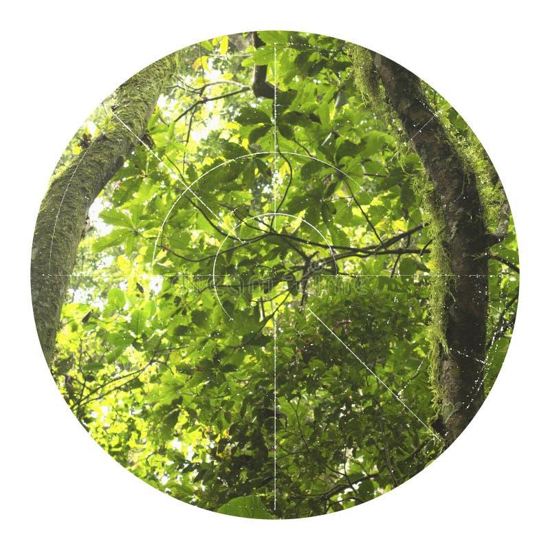 Illustrazione tropicale della giungla con la figura geometrica fotografie stock libere da diritti