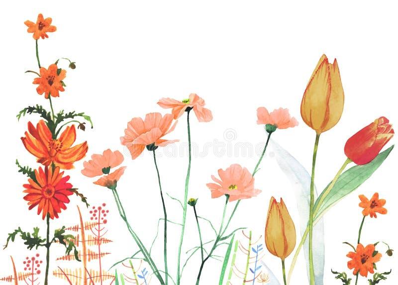 Illustrazione variopinta di crescita di fiori della primavera dell'acquerello illustrazione vettoriale