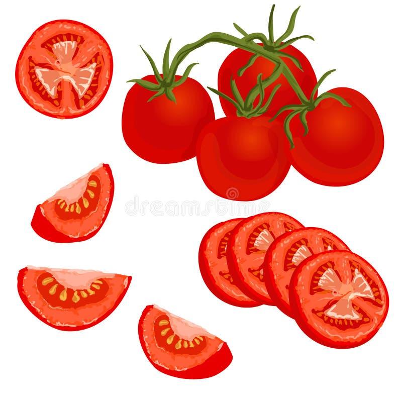 Illustrazione variopinta di vettore del pomodoro illustrazione di stock