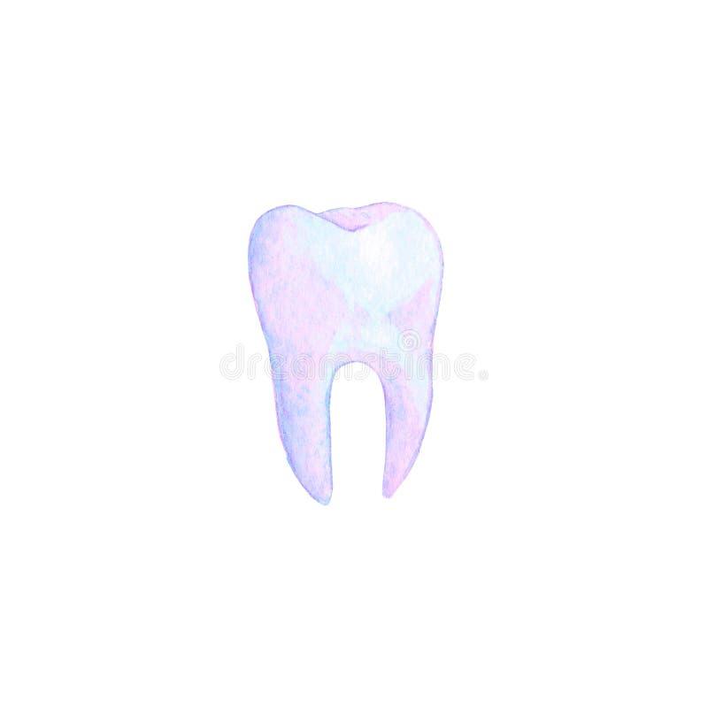 Illustrazione viola del dente dell'acquerello royalty illustrazione gratis