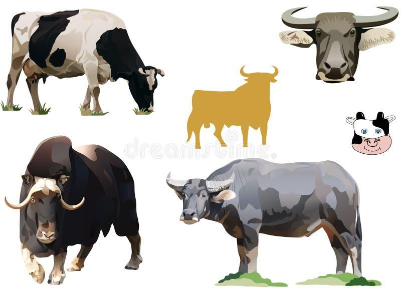 Illustrazioni dei tori e delle mucche illustrazione di stock