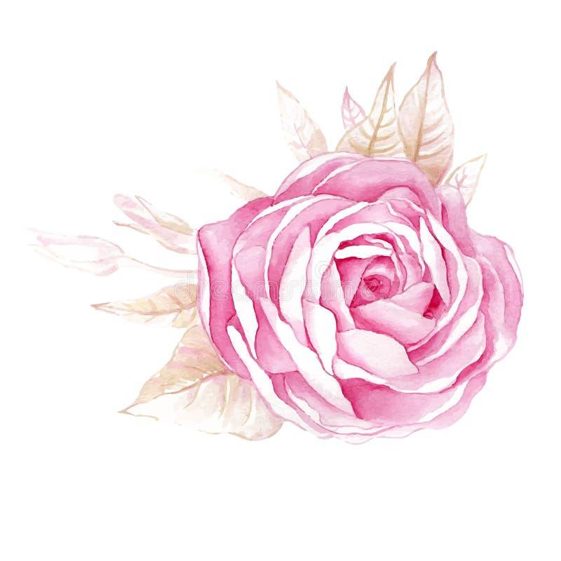 Illustrazioni dell'acquerello del fiore rosa su fondo bianco illustrazione vettoriale