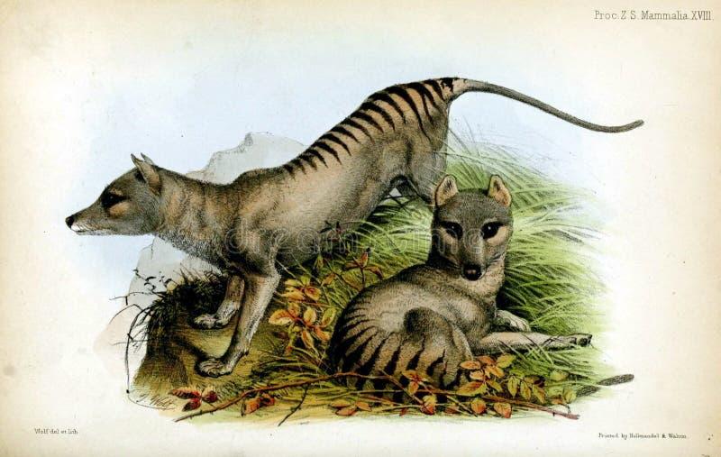 Illustrazioni dell'animale royalty illustrazione gratis
