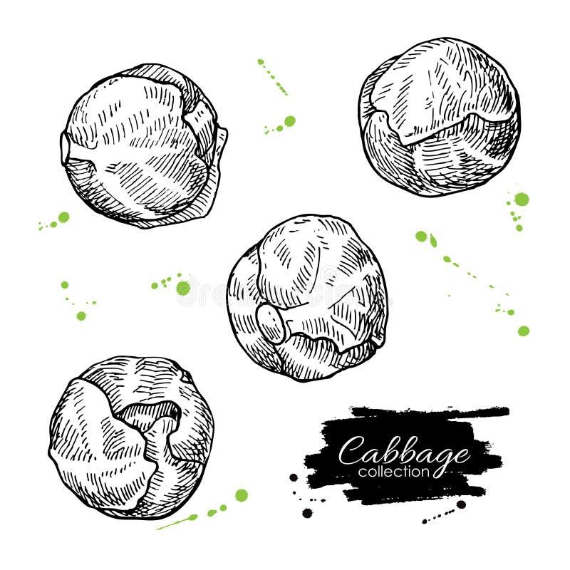 Illustrazioni disegnate a mano del cavoletto di Bruxelles Engrav di verdure illustrazione vettoriale