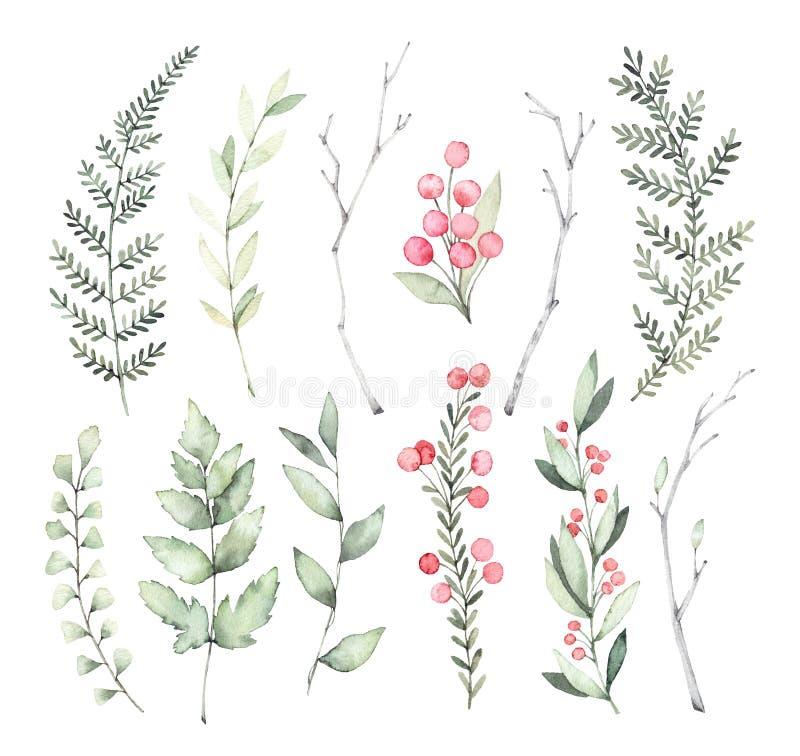Illustrazioni disegnate a mano dell'acquerello Clipart botanico Insieme del g illustrazione vettoriale