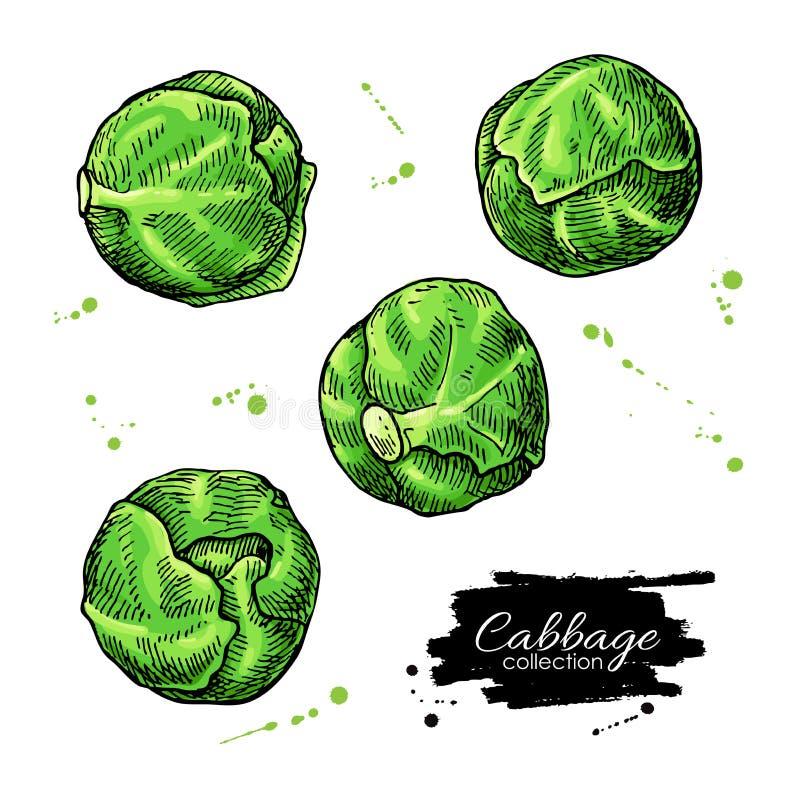 Illustrazioni disegnate a mano di vettore del cavoletto di Bruxelles Oggetti di verdure di stile artistico royalty illustrazione gratis
