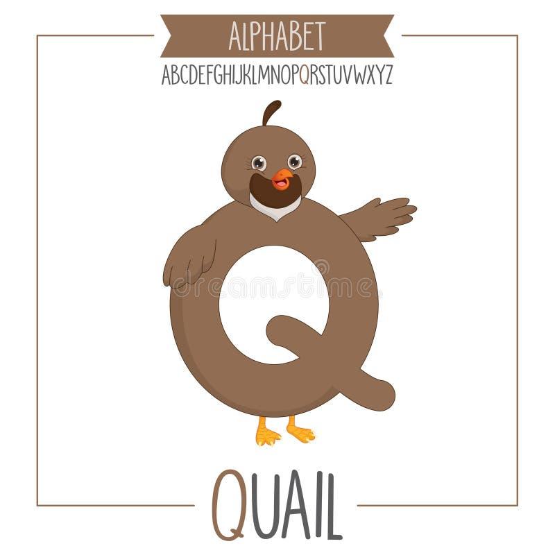 Illustrerad alfabetbokstav Q och vaktel royaltyfri illustrationer
