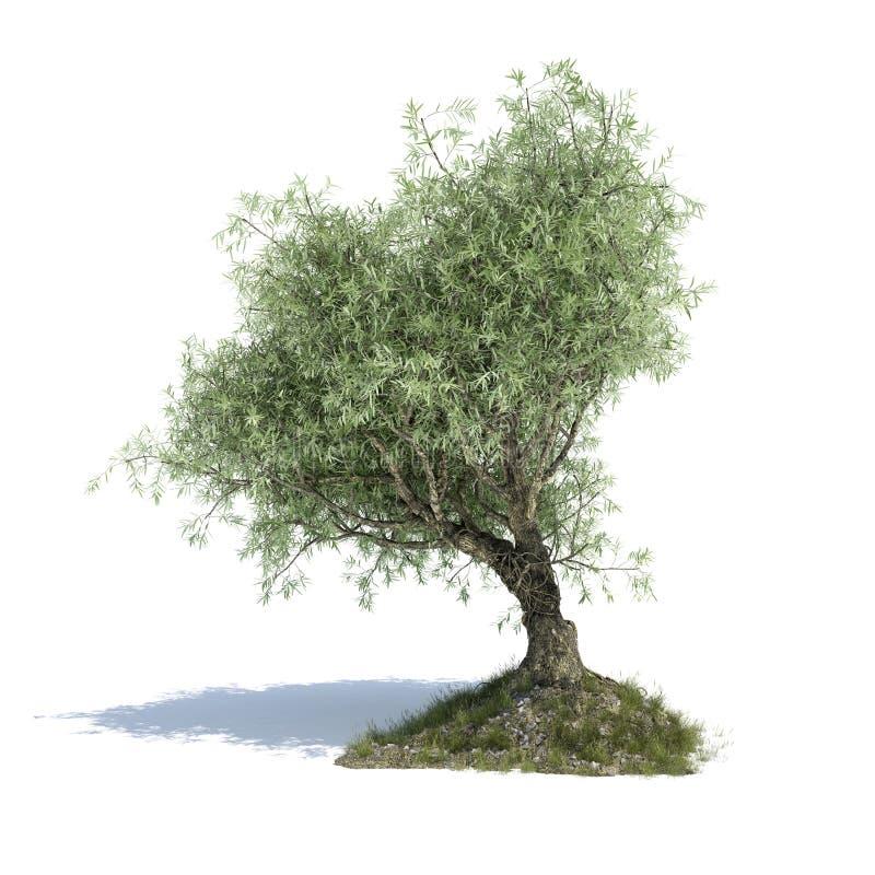 Illustrerad olivträd 3d royaltyfri illustrationer