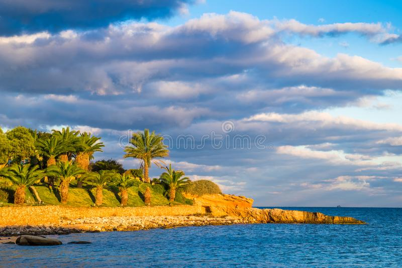 IlMellieha,马耳他-在日落的美丽的棕榈树在Mellieha附近 免版税库存图片