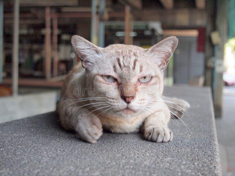 Ilsken katt med olyckligt arkivfoton