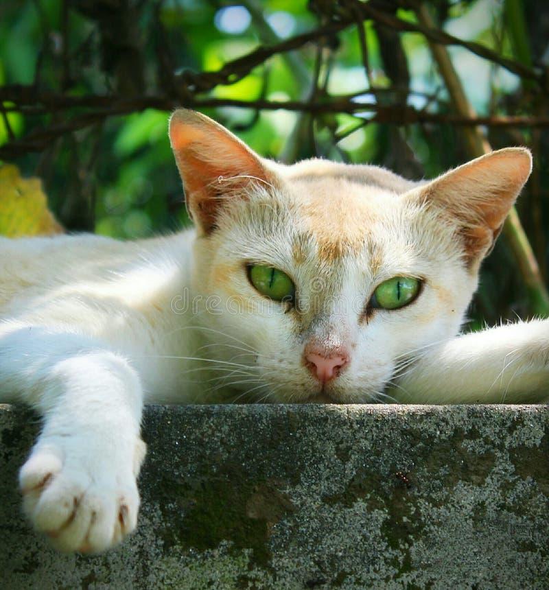 Ilsken seende katt royaltyfria bilder