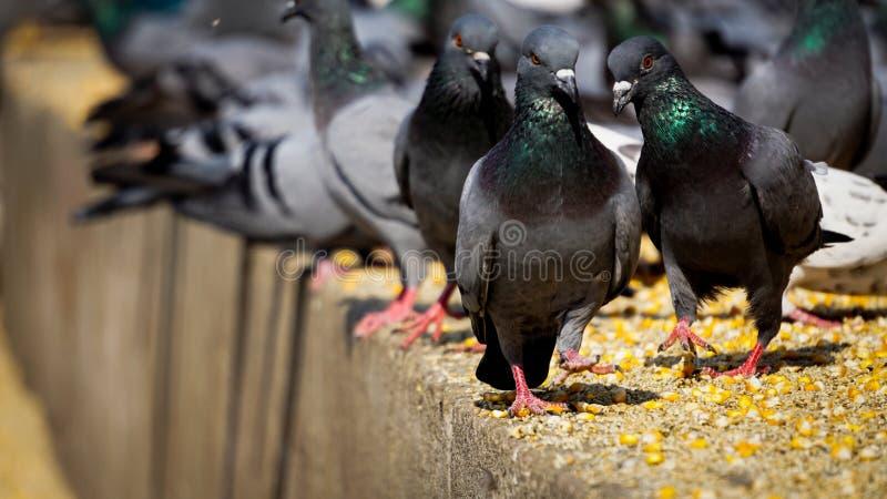 Ilskna fåglar royaltyfri fotografi
