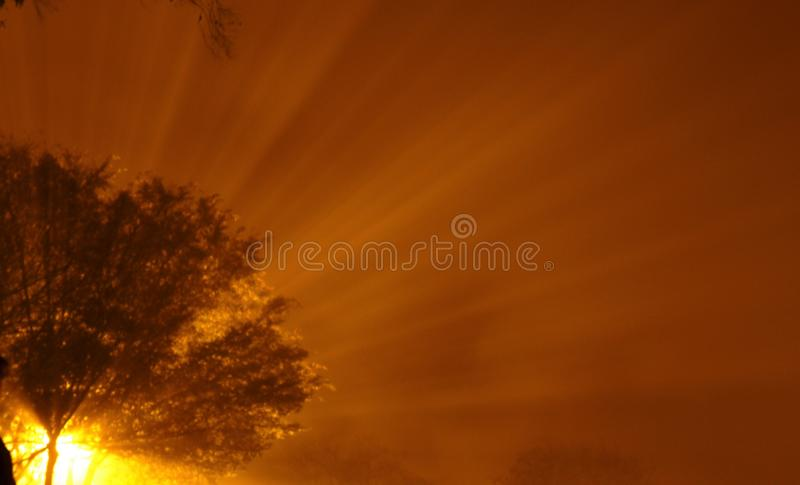 Iluminação clara da névoa do sódio fotografia de stock royalty free