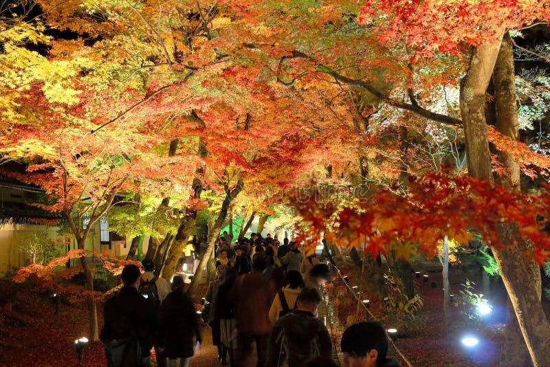 Iluminação da folha do outono foto de stock