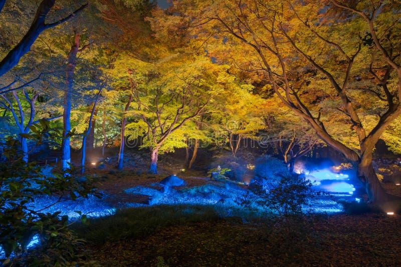 Iluminação do outono imagem de stock