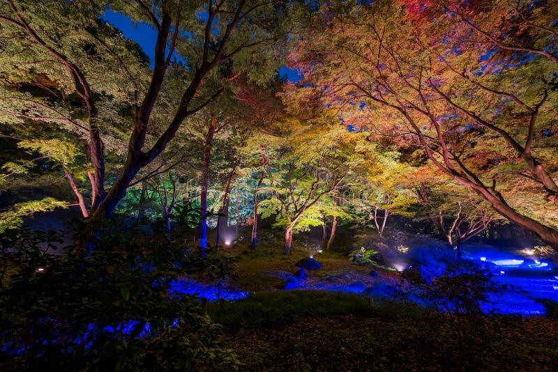 Iluminação do outono fotos de stock royalty free