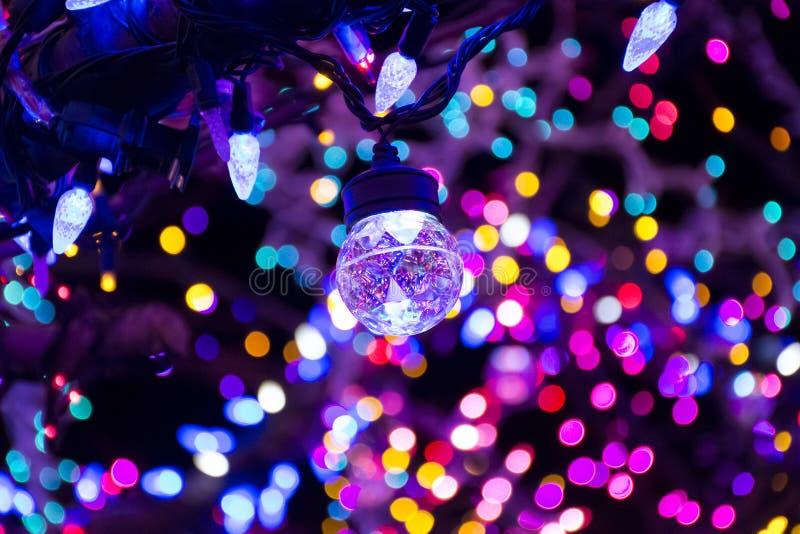 Iluminação mágica da árvore, Colômbia MO fotos de stock