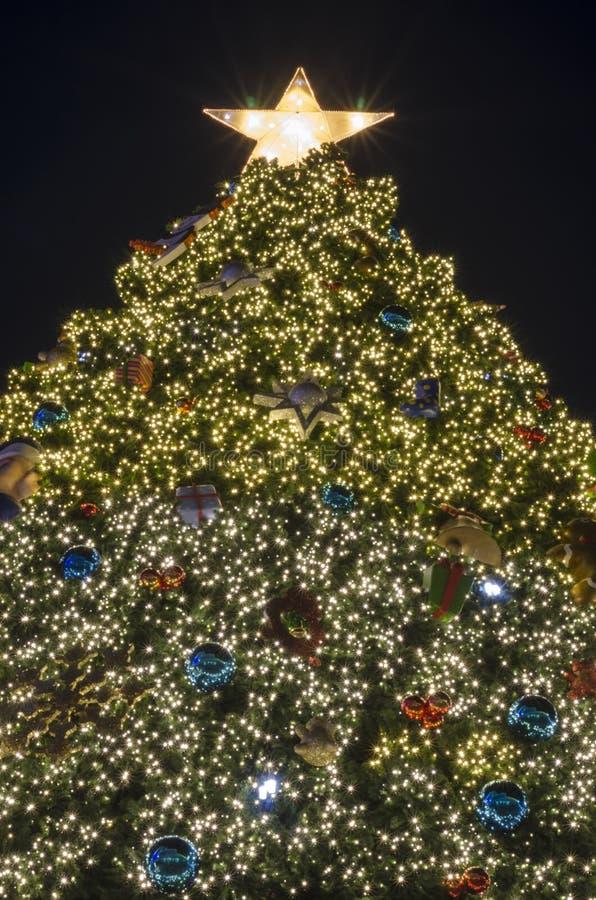 Iluminación del árbol de navidad fotografía de archivo libre de regalías