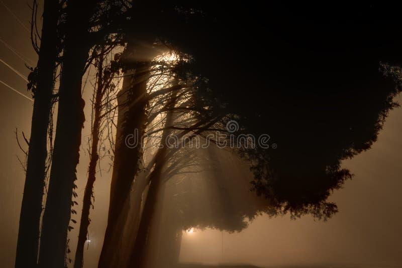 Iluminazioni pubbliche nebbiose alla mezzanotte fotografie stock libere da diritti