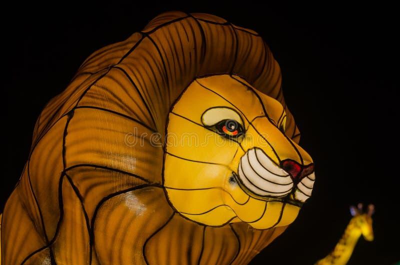 Iluminujący lew zdjęcia royalty free
