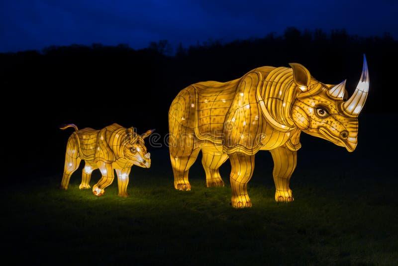 Iluminujący nosorożec pokazu lampion zdjęcia royalty free