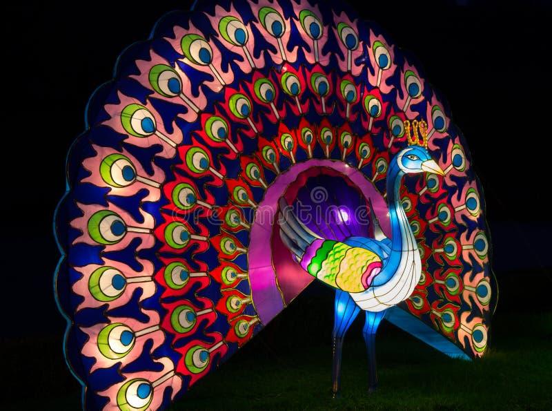 Iluminujący Pawi lampion obraz stock