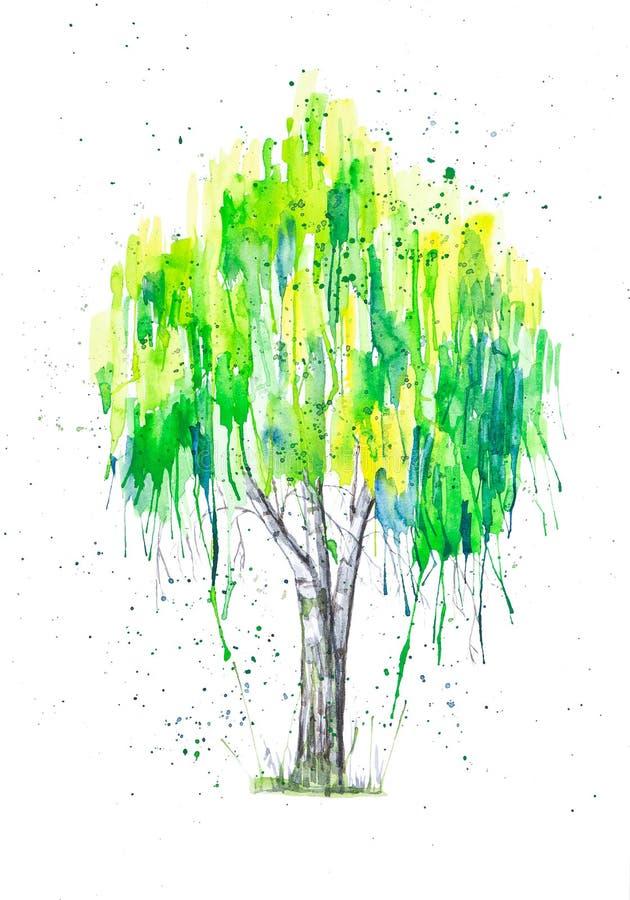 Ilustração abstrata da aquarela da árvore de vidoeiro verde do russo com splashis isolada no fundo branco Pintado à mão no papel ilustração do vetor