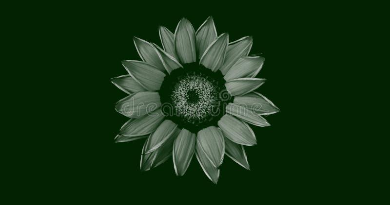 Ilustração abstrata de uma vista isolada de flor de gerbera no topo, em branco sobre fundo verde escuro Adequado para papel de pa imagem de stock royalty free