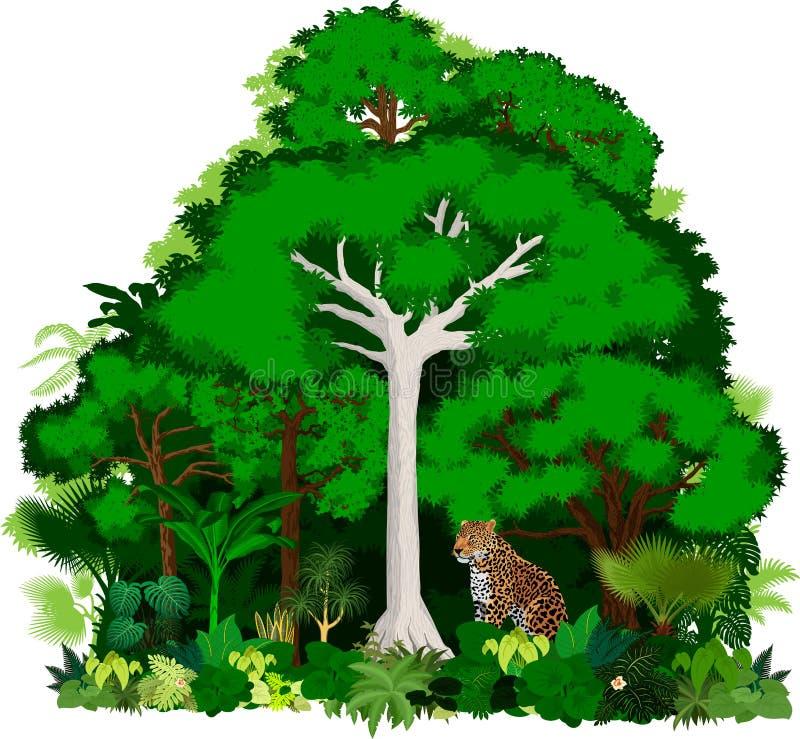 Ilustração africana da selva do vetor Selva tropical da floresta do vetor com leopardo ilustração stock