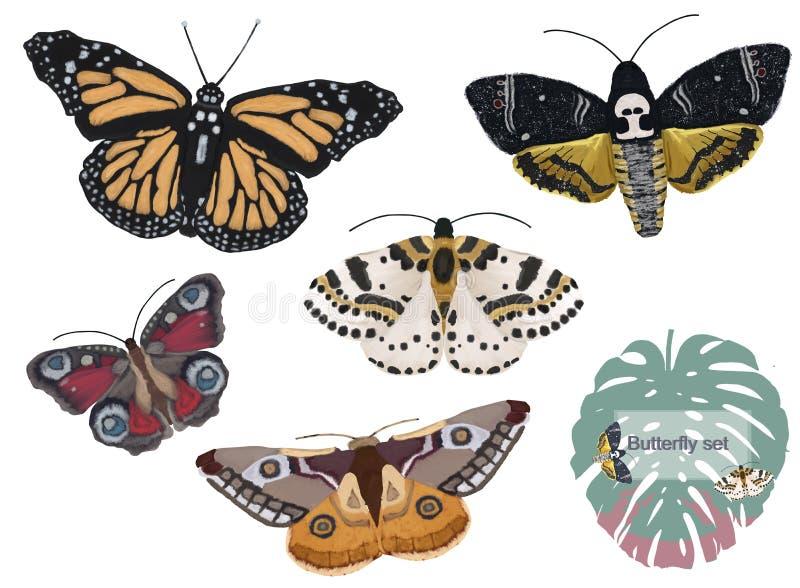 Ilustração ajustada bonito das borboletas da aquarela isoladas no fundo branco ilustração stock