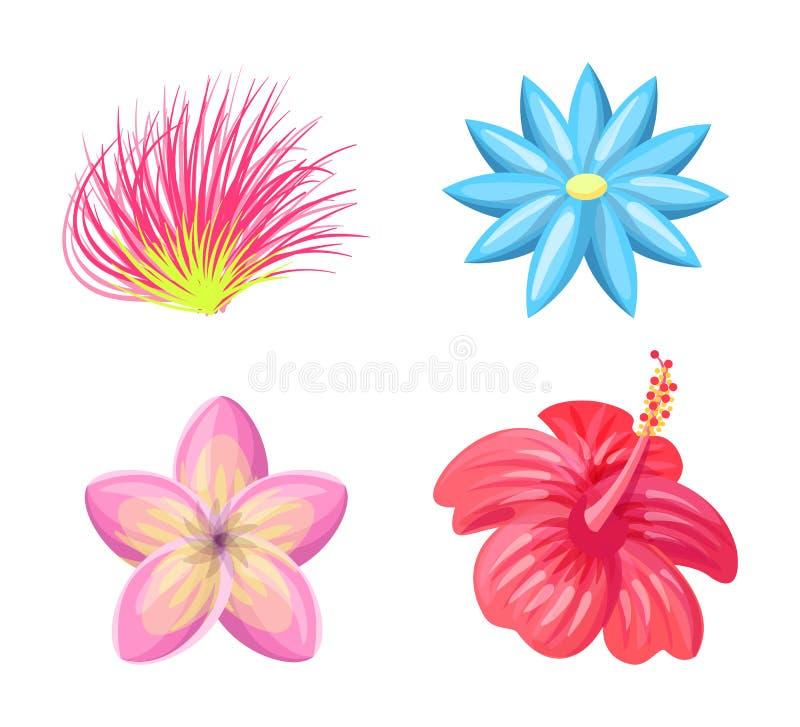 Ilustração ajustada do vetor do trópico das flores do Plumeria ilustração do vetor