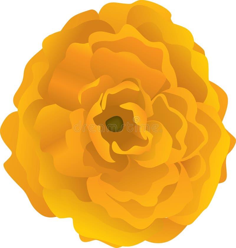 Ilustração alaranjada da flor ilustração royalty free