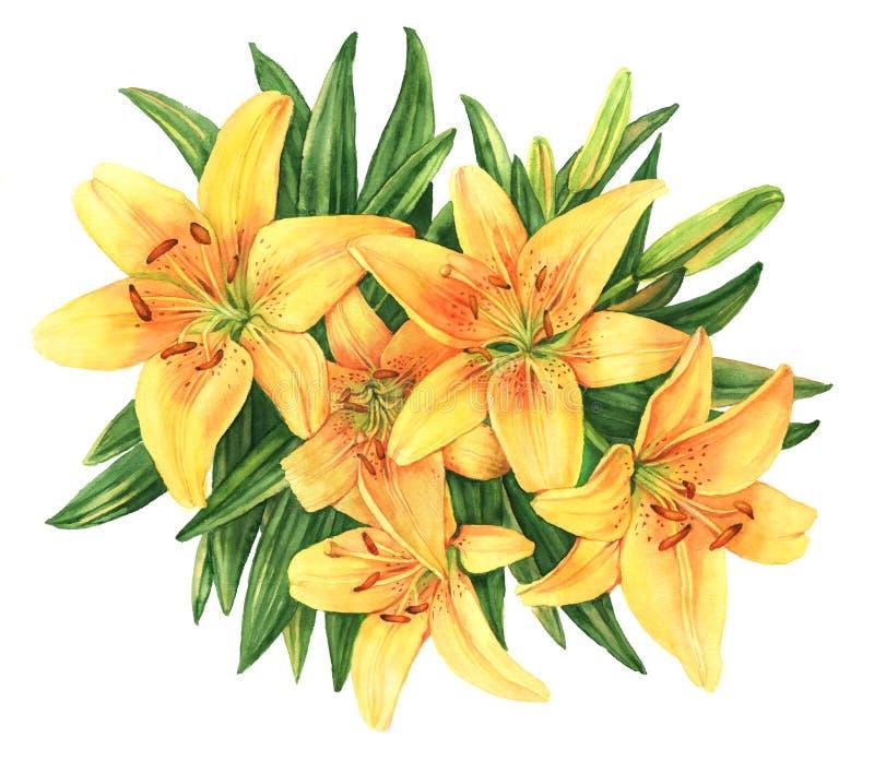 Ilustração amarela da aquarela da flor do ramalhete dos lírios ilustração stock