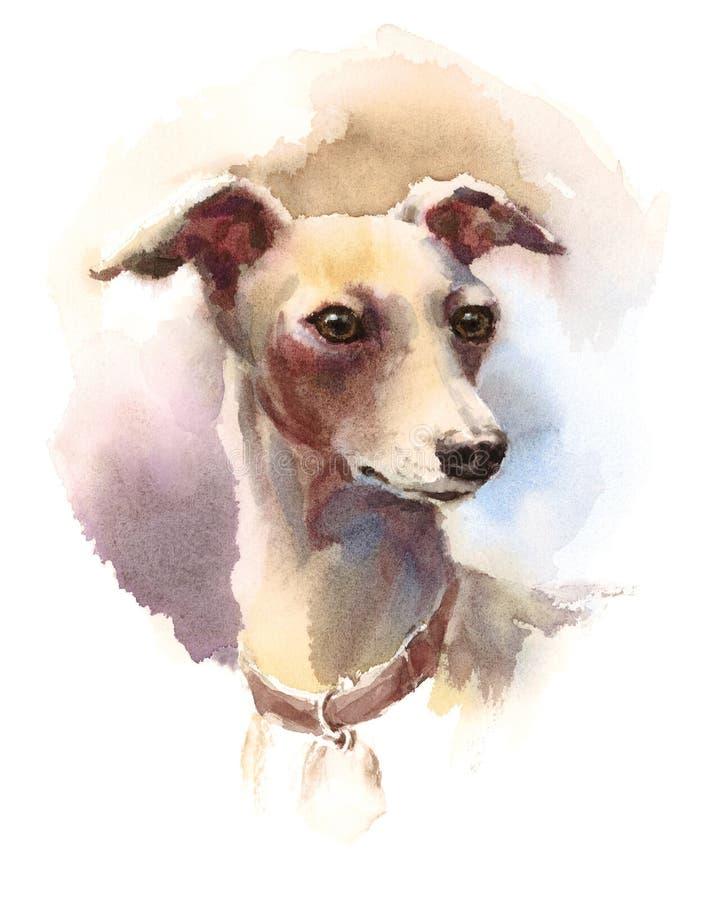 Ilustração animal da raça do cão da aquarela do galgo italiano pintado à mão ilustração do vetor