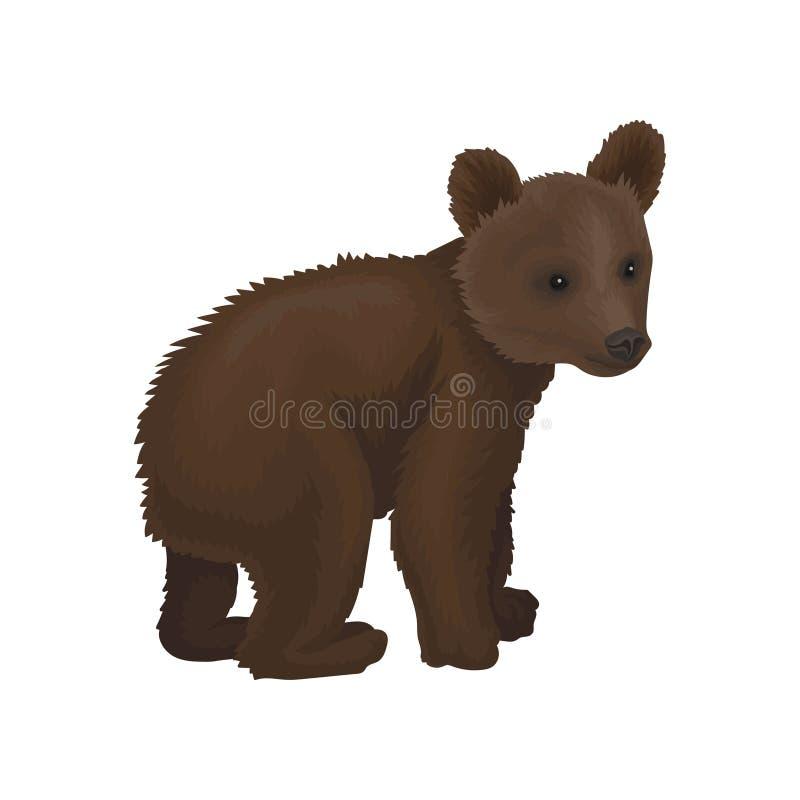 Ilustração animal do vetor da floresta do norte selvagem pequena do filhote de urso em um fundo branco ilustração royalty free