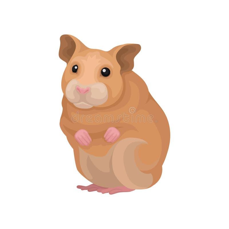 Ilustração animal do vetor do roedor pequeno bonito do hamster em um fundo branco ilustração royalty free