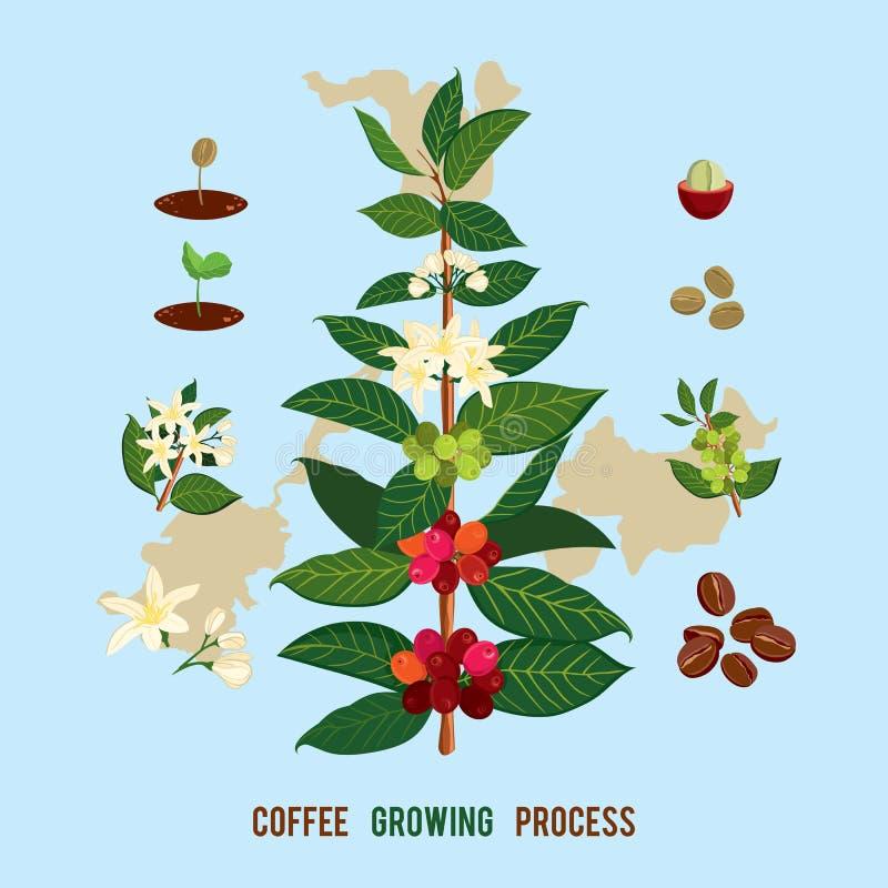 Ilustração bonita e colorida do botanyshe de uma planta e de uma árvore do café ilustração royalty free