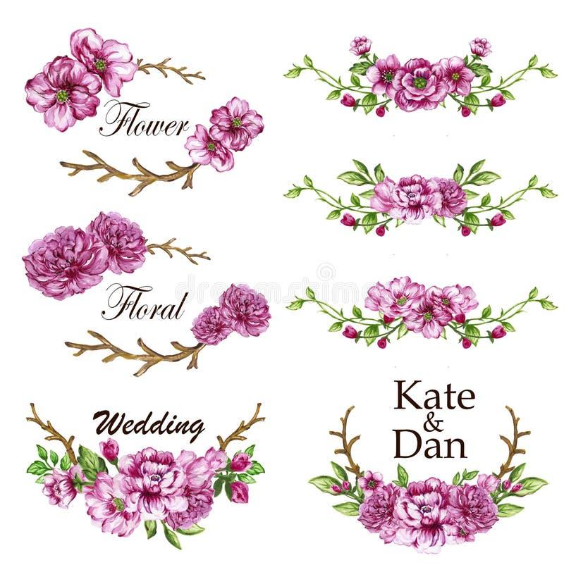 A ilustração botânica da aquarela e as flores cor-de-rosa saem de Natura ilustração royalty free