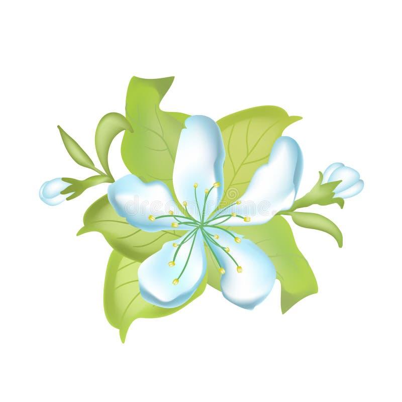 Ilustração botânica da natureza do vetor Apple floresce ilustração tirada mão do vetor das flores da maçã ilustração stock