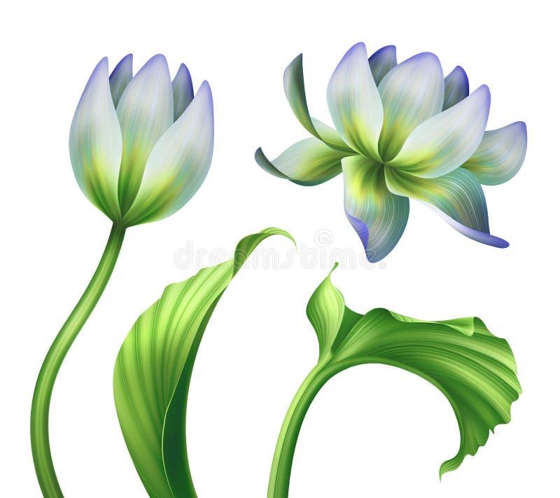 Ilustração botânica, flores de lótus bonitas, clipart floral, grupo de elementos do projeto, isolado no fundo branco ilustração do vetor