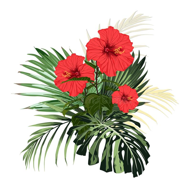 Ilustração botânica, ramalhete tropical bonito das flores, flores vermelhas do hibiscus, folhas de palmeira, plantas exóticas ilustração royalty free