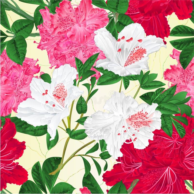 Ilustração botânica sem emenda do vetor do vintage do arbusto da montanha do galho dos rododendros das flores branco cor-de-rosa  ilustração do vetor