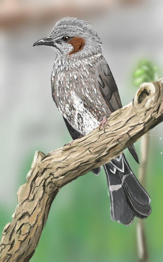 Ilustração Brown-orelhuda do Bulbul - Digital ilustração royalty free