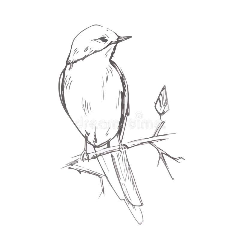 Ilustração cinzenta do vetor do esboço do lápis do pássaro ilustração stock